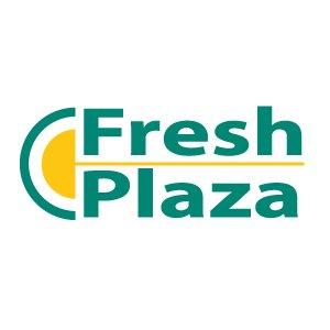 frische Plaza-Elbefruit