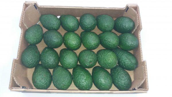 avocado-hass-22_1