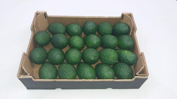 avocado-hass-22_2