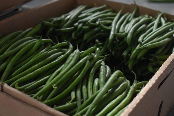 organic-green-beans