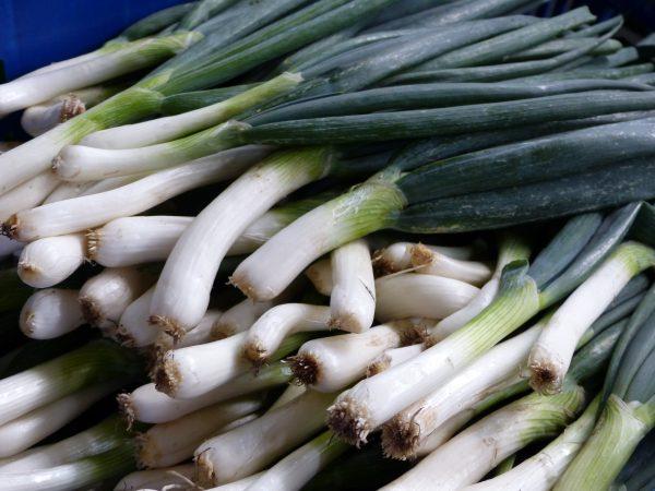 organic-spring-onion