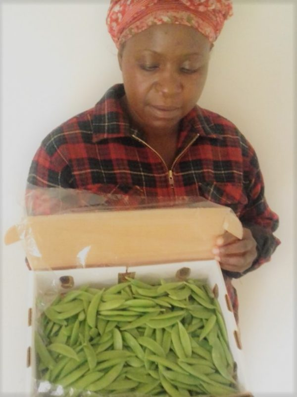 sugar-snaps-grower-zimbabwe