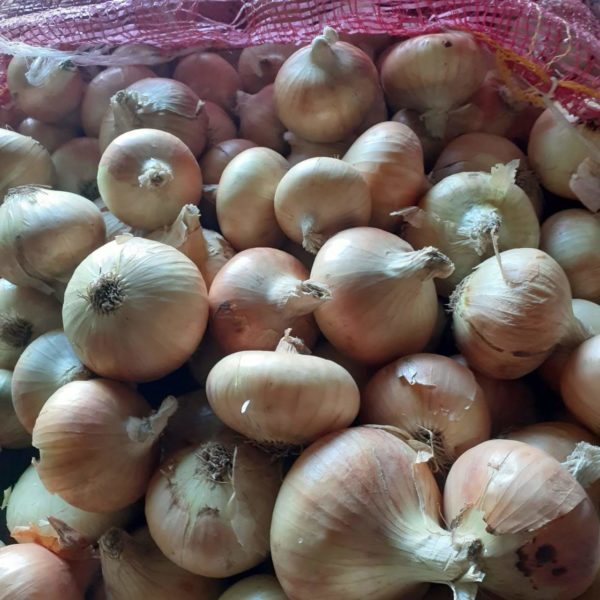yellow-brown-onion-egypt